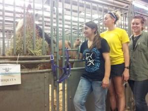 Here's Chiquita happily munching hay.